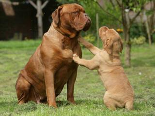 Pagodahills Ranch - Dog Breeders
