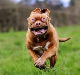 Littellbordeaux - Dog Breeders