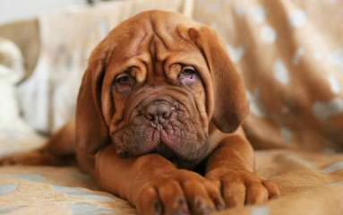 Blake's Star Dogues - Dog Breeders