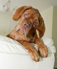 Puppycreek Kennels - Dog Breeders