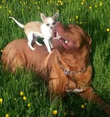 Miletone Bordeaux - Dog Breeders