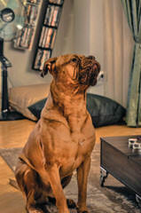 PARKAVE DOGUE DE BORDEAUX - Dog Breeders