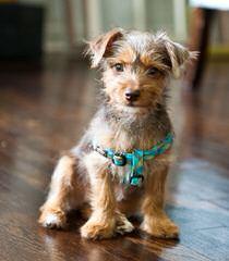 Averitt's Pups - Dog Breeders