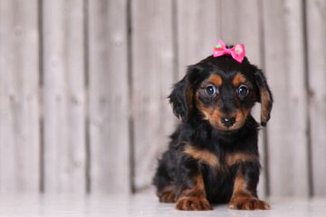 Parson's Family Pets - Dog Breeders