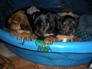 Ovetaalexander - Dog Breeders