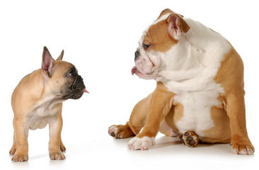 Dog Breeders in Kansas / Puppies For Sale in Kansas