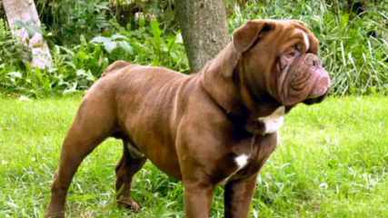 The Best Of The Best - Dog Breeders