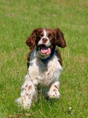 Deborah Keays - Dog Breeders