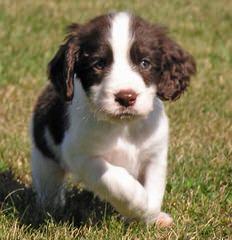 David Swartwood - Dog Breeders