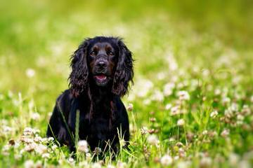 Ruskate Registered Kennels - Dog Breeders