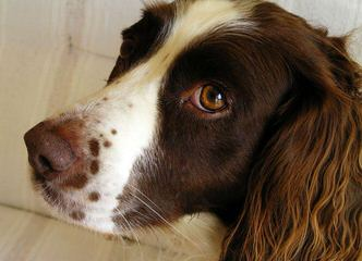 Kinship Kennels - Dog Breeders