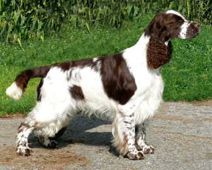 Carolina Kennels - Dog Breeders