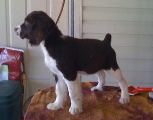 Shore Kennels - Dog Breeders