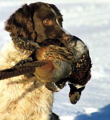 Gwennie - Dog Breeders