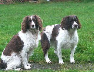 Roman Kennels - Dog Breeders