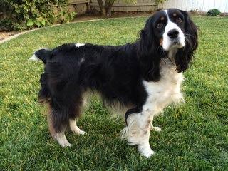 Promise Kennels + Trust & Respect Training - Dog Breeders