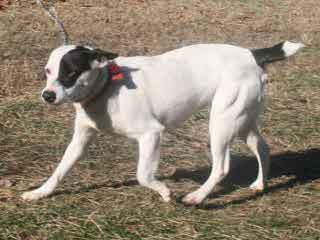 Westbrook hunting - Dog Breeders