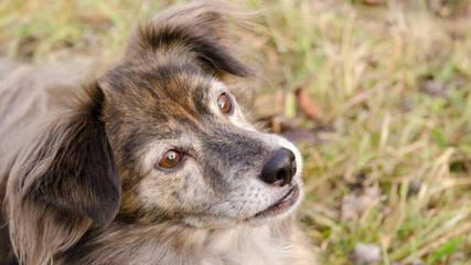 Mountain Treeing Feist Puppies - Dog Breeders