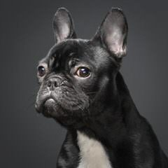 Jola - Dog Breeders