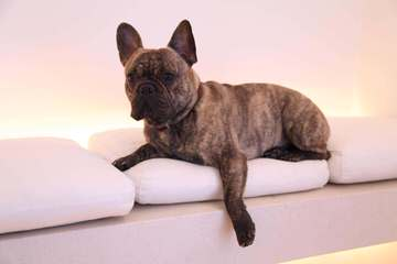 Jola - Dog Breeders