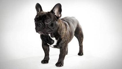 Botgeri - Dog Breeders