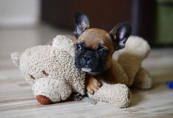 Petey's Pups - Dog Breeders