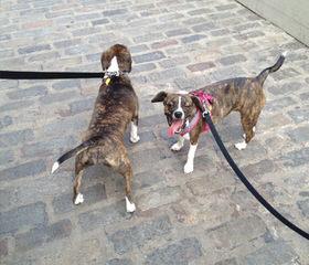 Centerfire Kennels - Dog Breeders