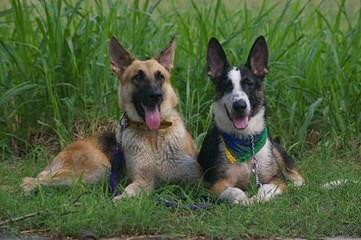 Redwood Runs - Dog Breeders