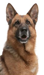 RJ Kennels - Dog Breeders