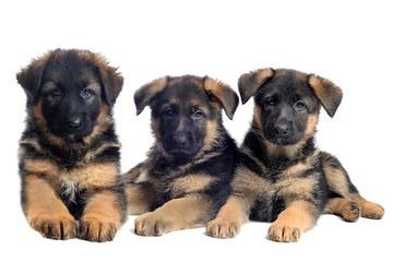 Kennel Von Der Rochele Ranch - Dog Breeders