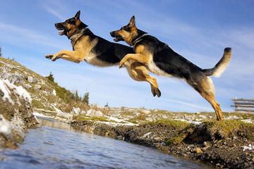 Zwinger vom Roten Wald - Dog Breeders