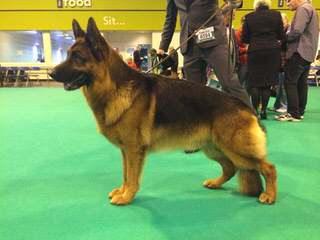 Felsengburg Kennel - Dog Breeders