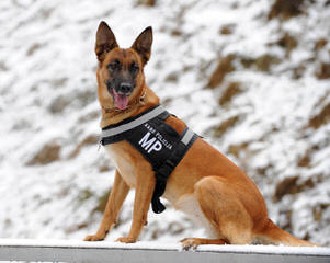 Camelot German Shepherds - Dog Breeders