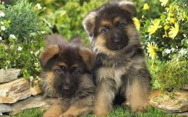 LSF Animal Care - Dog Breeders