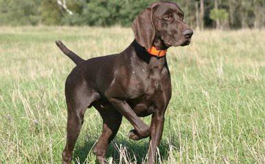NORD BOHEMIA SHERAM - Dog Breeders
