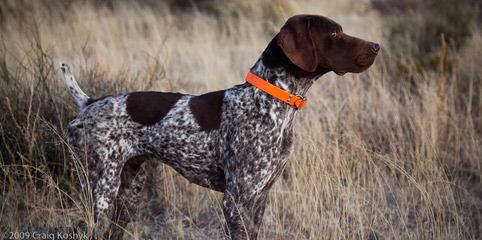 Shadow Hunting Preserv - Dog Breeders