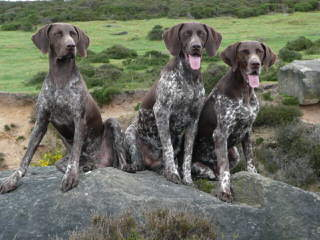 Eulenhof/Serakraut Kennels - Dog Breeders