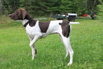 Points North Kennel - Dog Breeders
