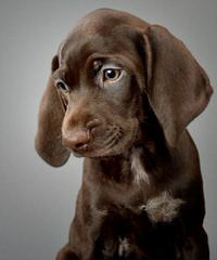 Eulenhof Kennels - Dog Breeders