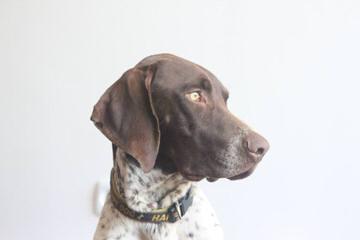 Refleksion Kennel - Dog Breeders