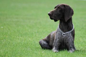 Fredheim - Dog and Puppy Pictures