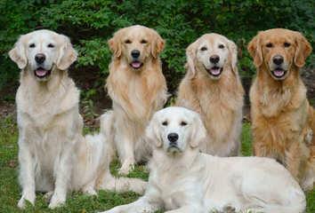 kabazoltan - Dog Breeders