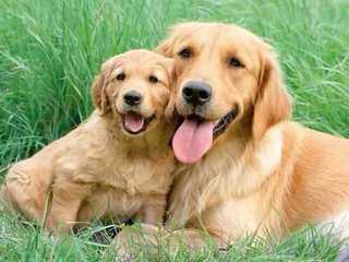 Helena Lamont - Dog Breeders
