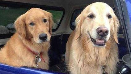 Jamie - Dog Breeders