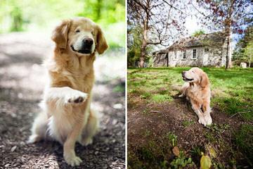 Sunset Acres - Dog Breeders