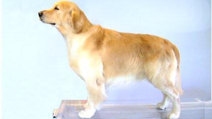 Bobyland Dog Hotel - Dog Breeders