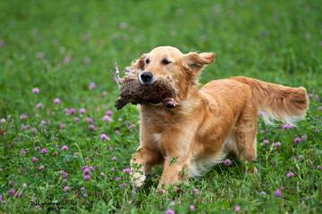 K.C.Hidden Mysteries Farm - Dog Breeders