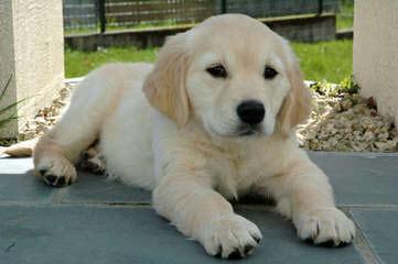 Fitz' Puppies - Dog Breeders