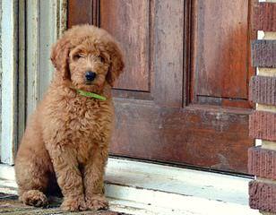 Puppy love - Dog Breeders