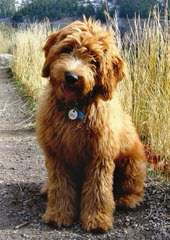 Willow Lane Farms - Dog Breeders